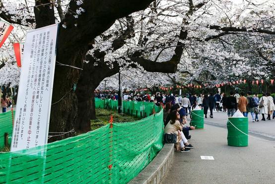 Japonci se kljub koronavirusu niso povsem odpovedali prazniku češenj