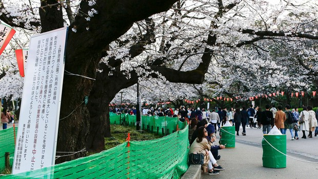 Japonci se kljub koronavirusu niso povsem odpovedali prazniku češenj (foto: profimedia)