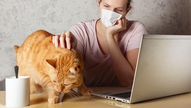 Prvi primer, ko je lastnik s koronavirusom okužil svojega mačka (foto: profimedia)