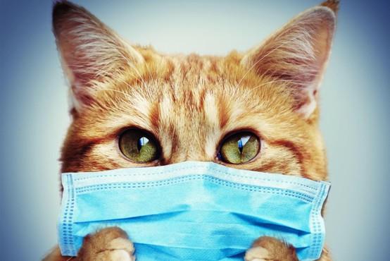 Oboleli naj preventivno omejijo tesne stike z domačimi živalmi