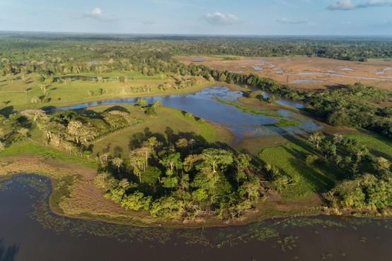 Tropski gozdovi ne uspejo porabiti vsega ogljika, ki ga izpuščamo v ozračje