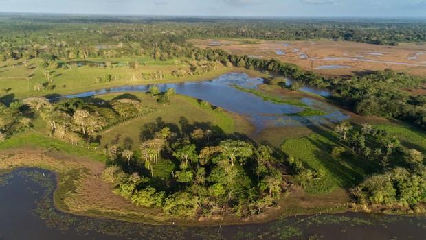 Tropski gozdovi ne uspejo porabiti vsega ogljika, ki ga izpuščamo v ozračje (foto: profimedia)
