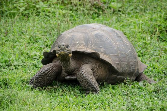 Italijanka s seboj na sprehod vzela svojo želvo