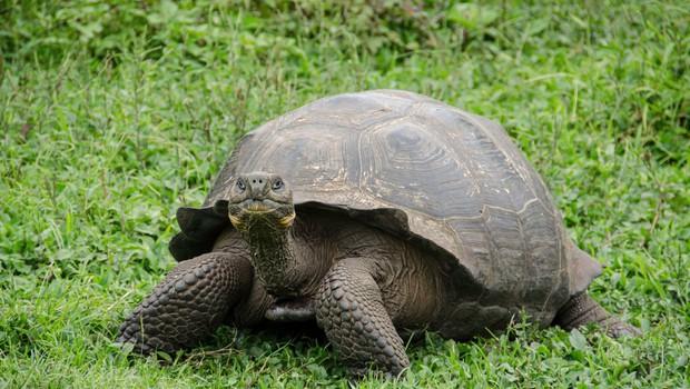 Italijanka s seboj na sprehod vzela svojo želvo (foto: Profimedia)