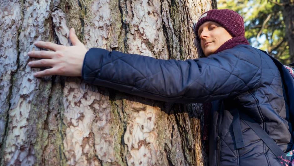 Islandski gozdarji priporočajo, da preženete osamljenost z objemanjem dreves (foto: profimedia)