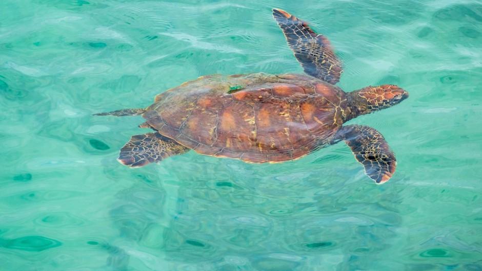 Morske živali se vračajo k obali zaradi okužbe opustelih plaž na Tajskem (foto: profimedia)