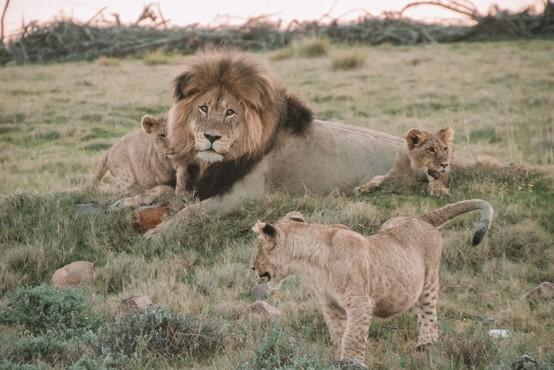 To so najimenitnejši prizori živali v divjini, ki jih lahko spremljate (skoraj) v živo