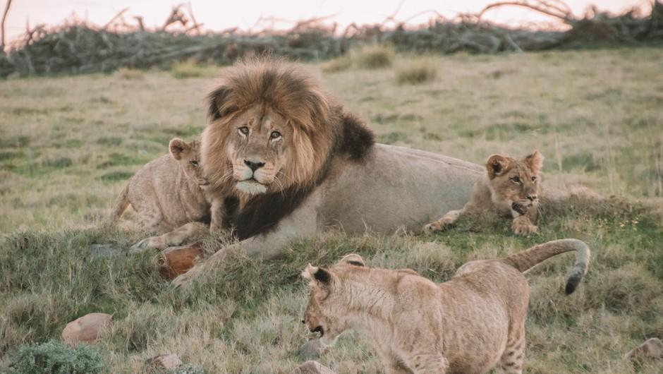 To so najimenitnejši prizori živali v divjini, ki jih lahko spremljate (skoraj) v živo (foto: Unsplash)