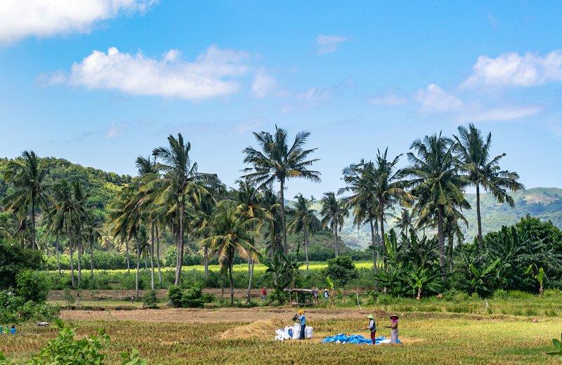 Delo na riževih poljih ni obstalo