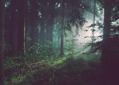 Zakaj je dobro s sprehodi v gozdu nadaljevati tudi po koncu pandemije (piše Petra W.)