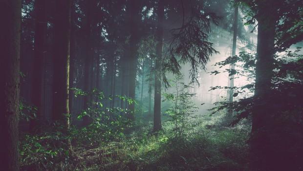 Zakaj je dobro s sprehodi v gozdu nadaljevati tudi po koncu pandemije (piše Petra W.) (foto: unsplash.com)