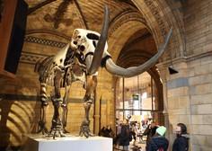 V Mehiki so pri gradnji novega letališča naleteli na ostanke mamutov, starih več kot 35.000 let