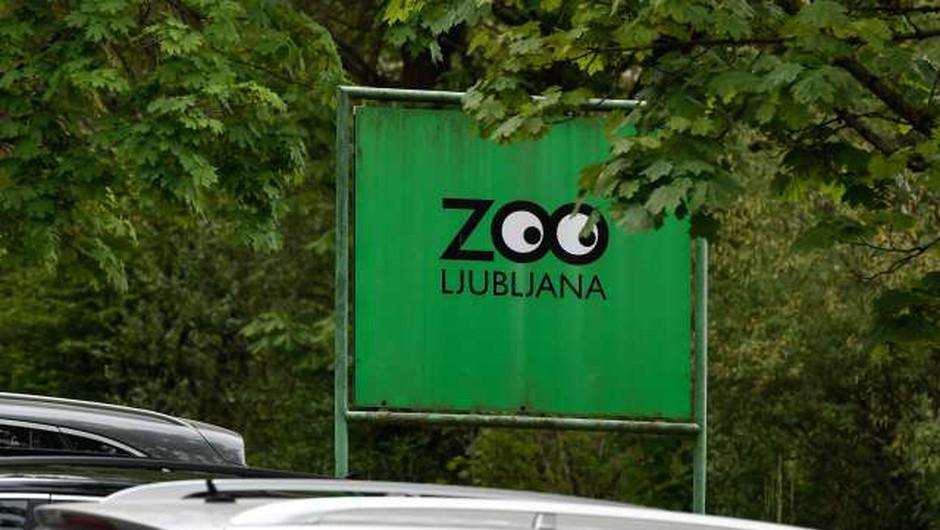V ZOO Ljubljana ponovno odprta vivarij in otroški živalski vrt (foto: Nebojša Tejić/STA)