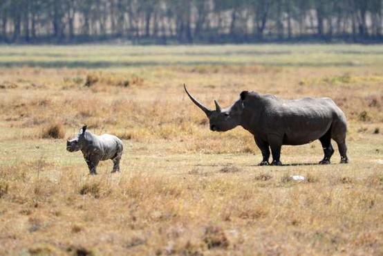 Preko 500 na kopnem živečim vrstam vretenčarjev grozi izumrtje