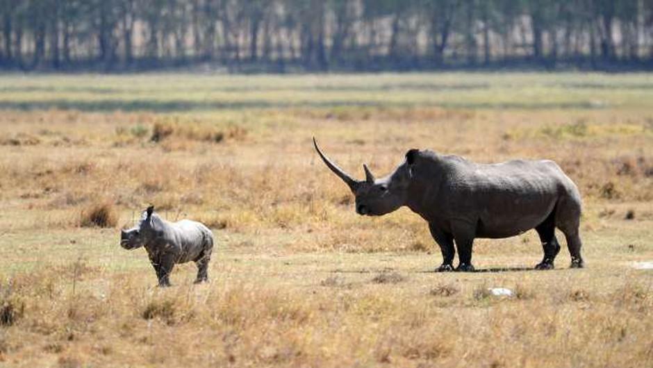 Preko 500 na kopnem živečim vrstam vretenčarjev grozi izumrtje (foto: Xinhua/STA)