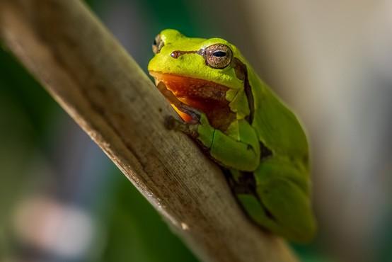 V Španiji fotograf umrl med obredom z žabjim strupom