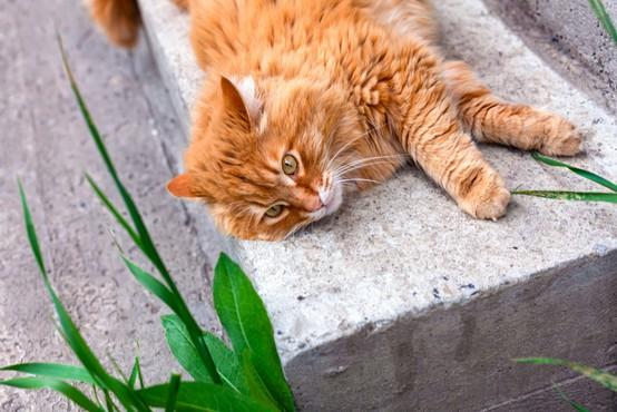 Zaradi padca z okna se na Dunaju vsak dan poškoduje 15 mačk