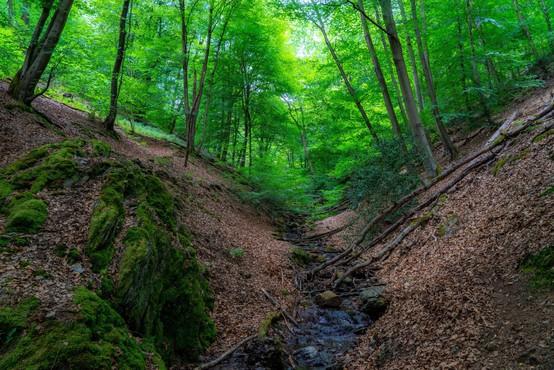 Pomori v gozdovih se nadaljujejo, opozarjajo v društvu AniMa