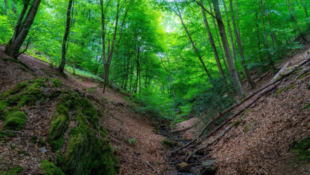 Pomori v gozdovih se nadaljujejo, opozarjajo v društvu AniMa (foto: profimedia)