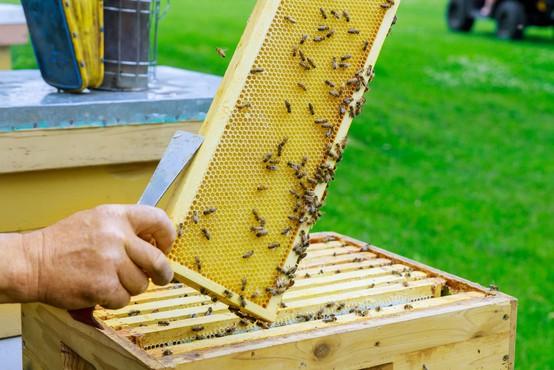 Na Hrvaškem razglasili naravno katastrofo zaradi množičnega pomora čebel