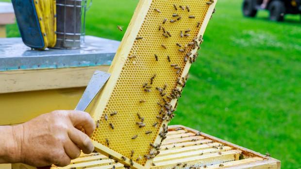 Na Hrvaškem razglasili naravno katastrofo zaradi množičnega pomora čebel (foto: Profimedia)