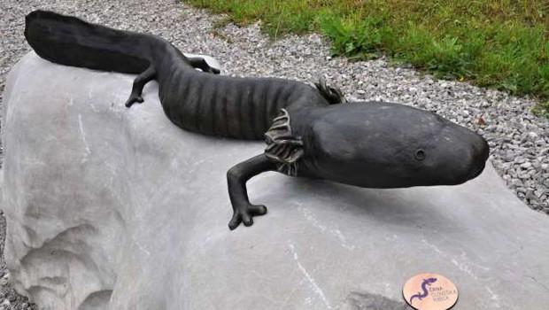 Belokranjska črna človeška ribica med najbolj ogroženimi vretenčarji v svetovnem merilu (foto: Rasto Božič/STA)