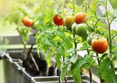 Vrt na balkonu; kaj potrebujete in kaj vam bo najbolje uspevalo