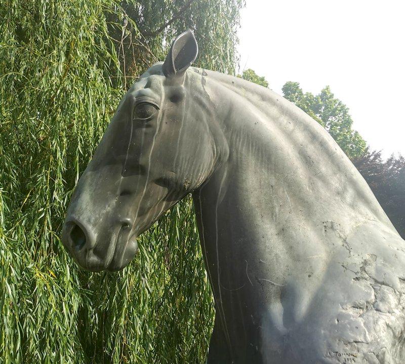 Konj v Slovenskih Konjicah