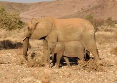 Skrivnostni pogin slonov v znameniti delti reke Okavango