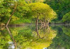 V brazilski Amazoniji zabeležili požarno najbolj uničujoč junij v 13 letih