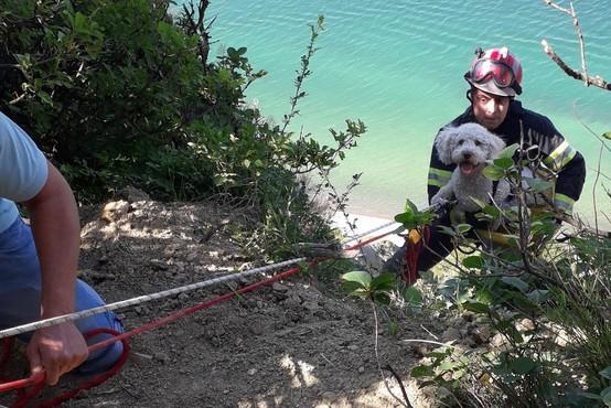 Zgodba za navdih: Gasilci rešili psičko, ki je v Strunjanu zdrsnila s pečine