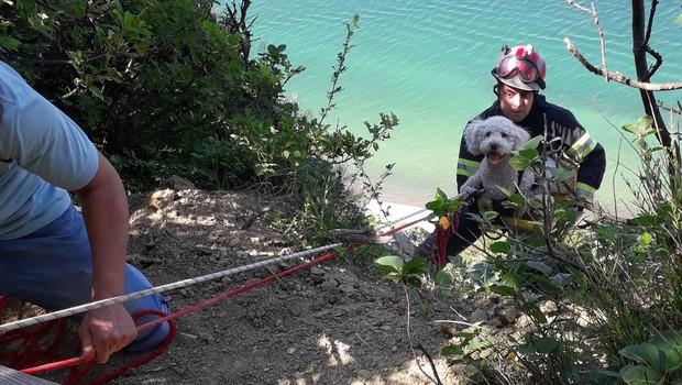 Zgodba za navdih: Gasilci rešili psičko, ki je v Strunjanu zdrsnila s pečine (foto: Gasilska brigada Koper)