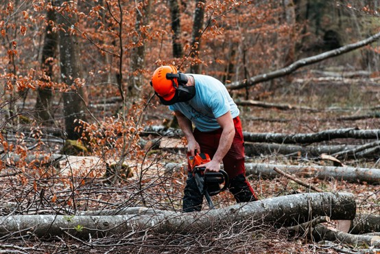 Pretirana sečnja gozdov v EU lahko vpliva na načrte boja proti podnebnim spremembam
