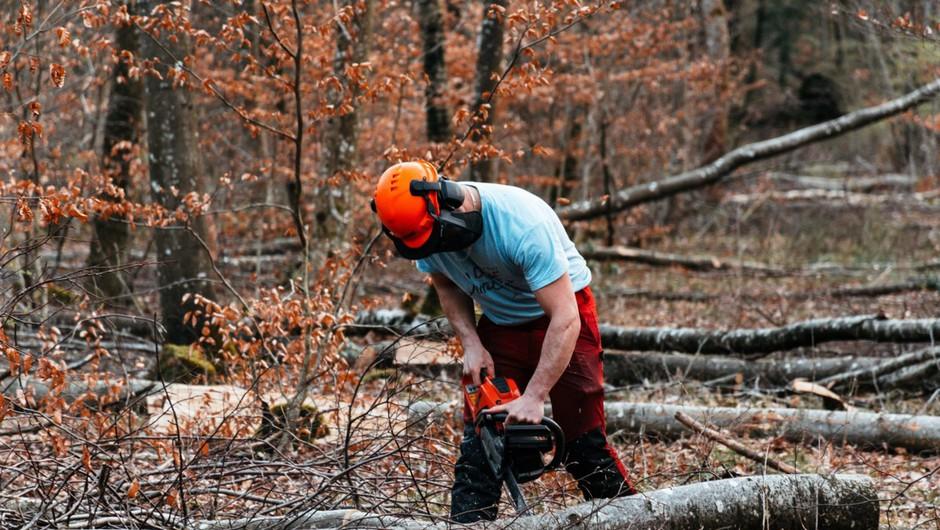 Pretirana sečnja gozdov v EU lahko vpliva na načrte boja proti podnebnim spremembam (foto: profimedia)
