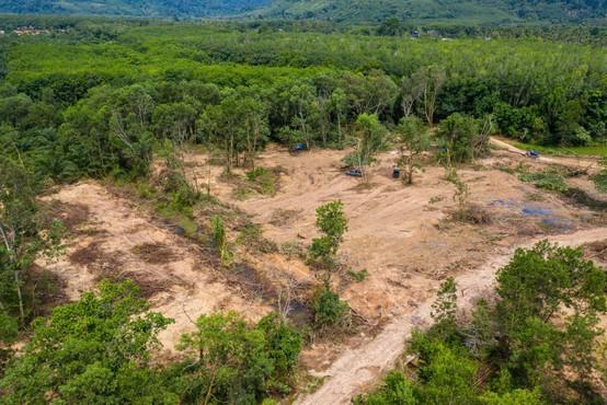 Amazonski pragozd v Braziliji pospešeno izginja v plamenih