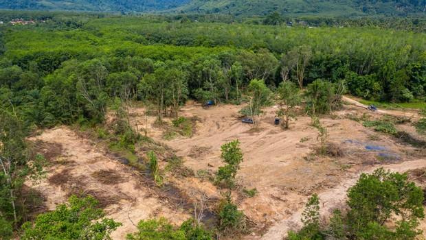 Amazonski pragozd v Braziliji pospešeno izginja v plamenih (foto: profimedia)