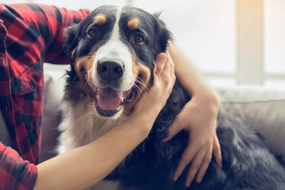 Znanstveniki trdijo: Eno leto življenja psa NI enako sedem človeških let!