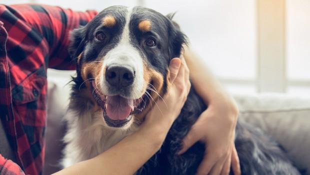 Znanstveniki trdijo: Eno leto življenja psa NI enako sedem človeških let! (foto: Shutterstock)