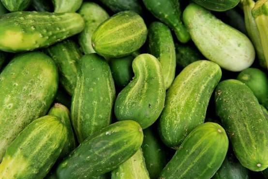 Prodaja kumaric na tržnicah manjša, cene pa so čedalje višje