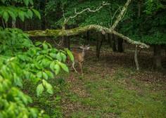 Preden stopite v gozd, v mislih obnovite bonton, ki si ga to razkošje narave zasluži