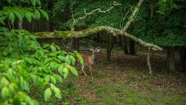 Preden stopite v gozd, v mislih obnovite bonton, ki si ga to razkošje narave zasluži (foto: profimedia)