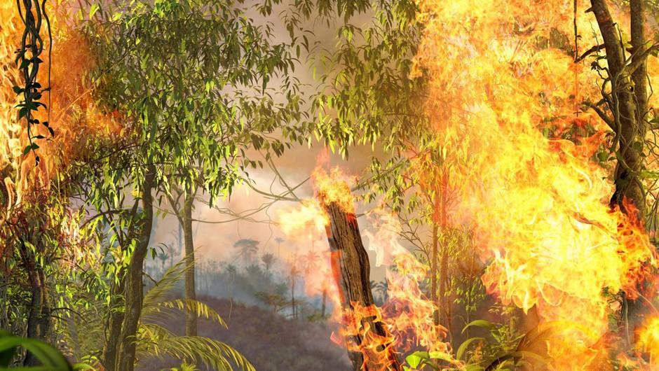 Kljub vladni prepovedi požigov je amazonski gozd znova v plamenih (foto: profimedia)