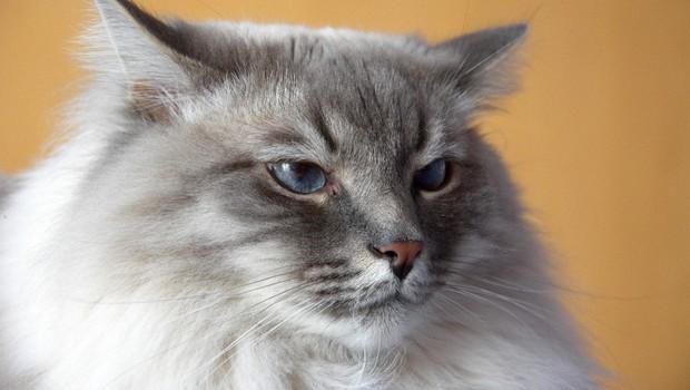 Šrilanška mačka tihotapila heroin in zbežala iz zapora (foto: Profimedia)