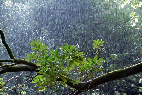 Torkova popoldanska neurja ponekod zalivala prostore in podirala drevesa