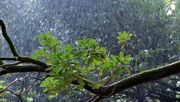 Torkova popoldanska neurja ponekod zalivala prostore in podirala drevesa (foto: Profimedia)