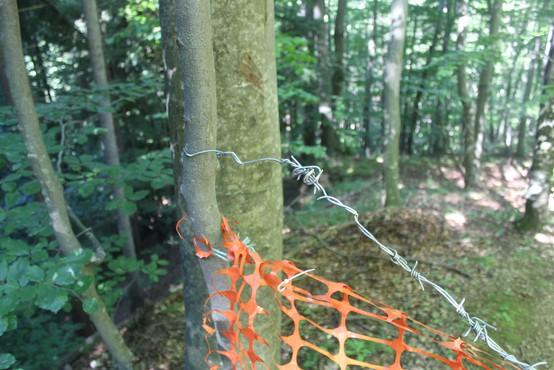 Policisti ovadili 50-letnega Rušana, ki naj bi čez gozdno pot napel plastično mrežo in bodečo žico