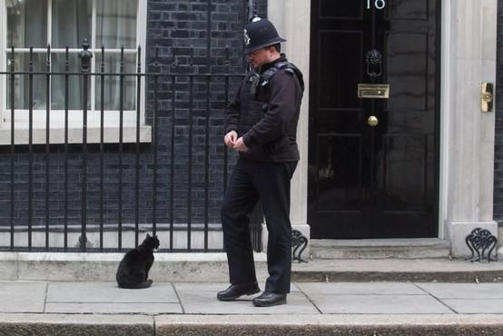 Palmerston, priljubljeni maček z britanskega zunanjega ministrstva, napovedal upokojitev