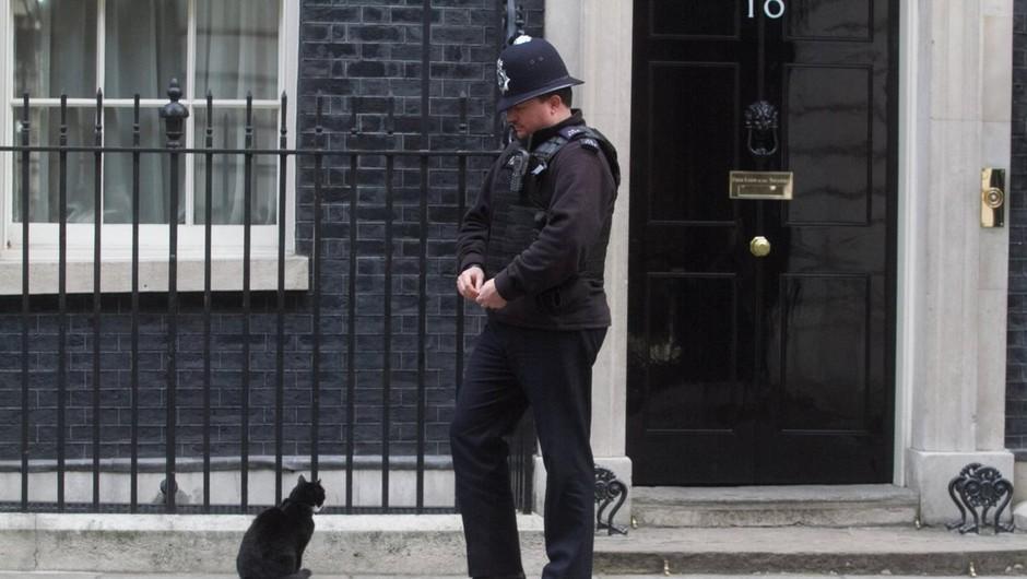 Palmerston, priljubljeni maček z britanskega zunanjega ministrstva, napovedal upokojitev (foto: profimedia)