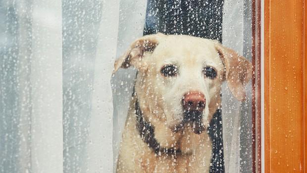 Srceparajoč video, kako ženska zapusti svojega psa sredi parkirišča (foto: Shutterstock)