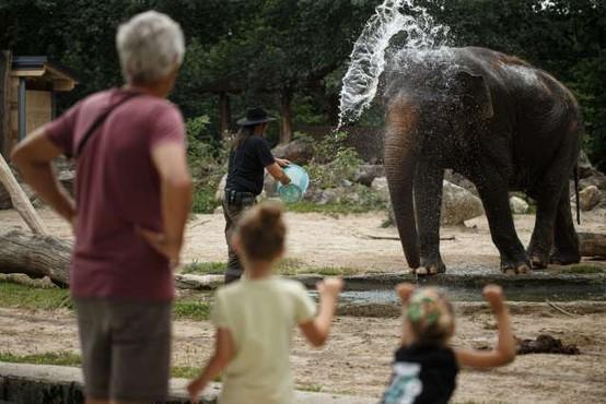 Ljubljanski živalski vrt ob svetovnem dnevu slonov vabi na delavnice o ogroženih velikanih
